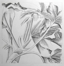 Plant Study 1