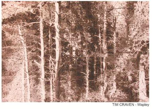 Tim Craven Wapley